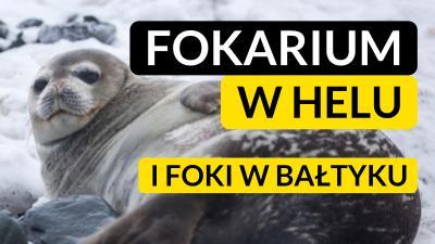 Hel: Fokarium w Helu. Foki w Polsce i foki w Bałtyku